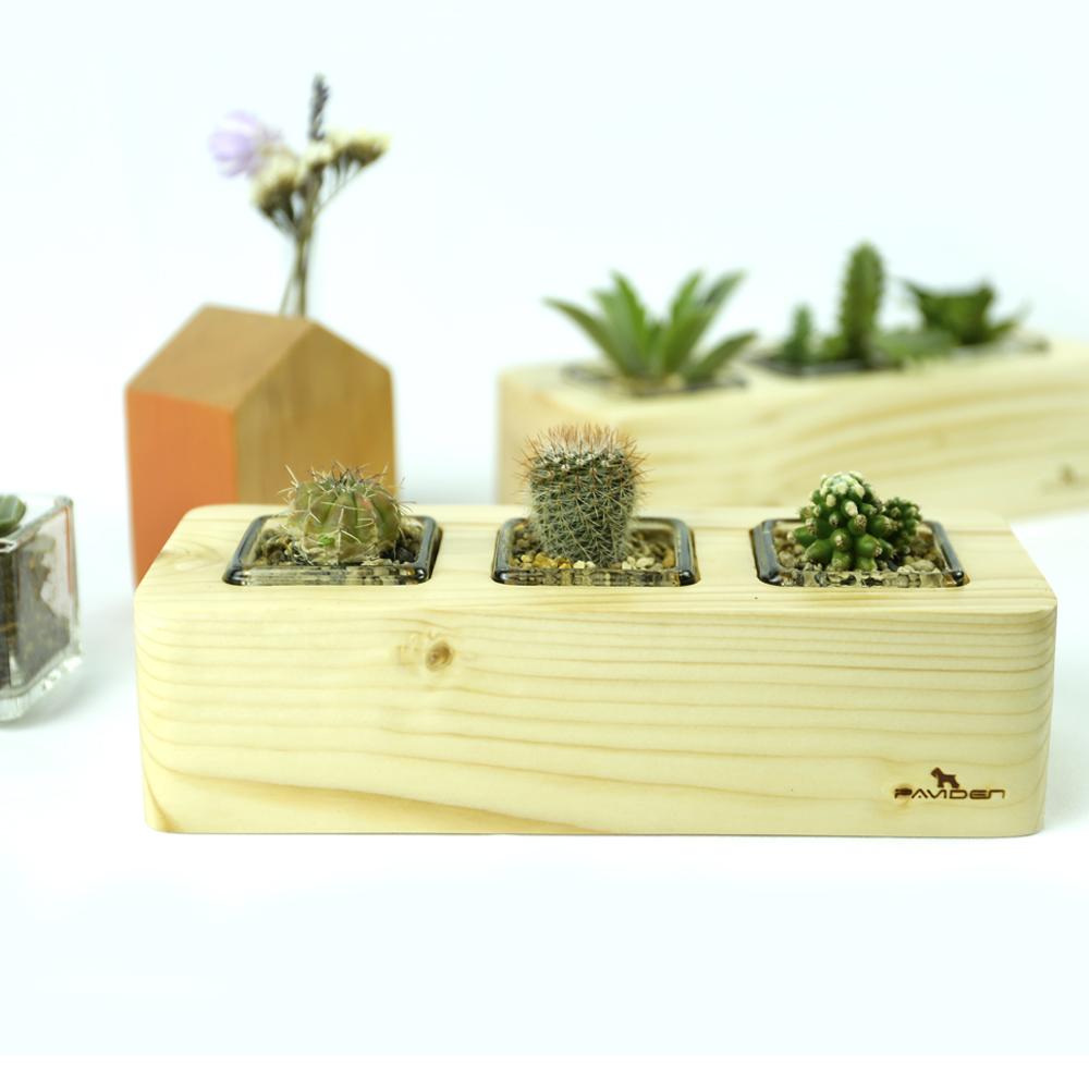 愛麗絲三座花盆【松木】多肉植物 小植栽用