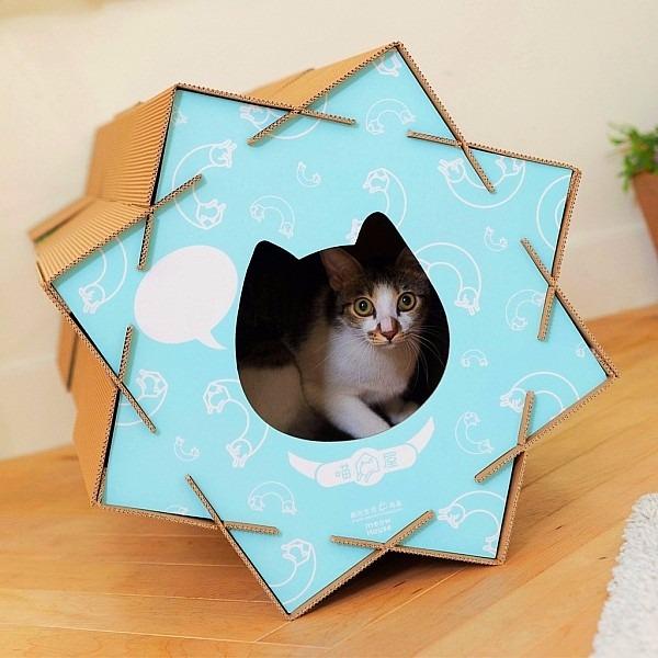 貓滾滾-藍色